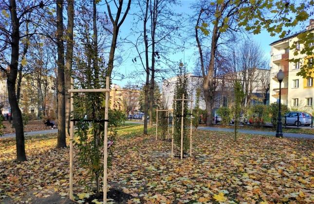 Miasto posadziło kilkadziesiąt nowych drzew